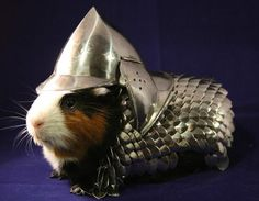 Funny pictures about Guinea pig suit of armor. Oh, and cool pics about Guinea pig suit of armor. Also, Guinea pig suit of armor. Hamsters, Rodents, Guinea Pig Costumes, Pet Costumes, Guinea Pig Clothes, Helmet Armor, Suit Of Armor, Body Armor, Knight In Shining Armor