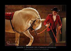D'Raza #flamenco #fashion #moda #Andalucia