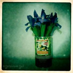Trader Joe's coffee cans make for great flower vases...