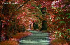 A trail by Sanjib Das on 500px
