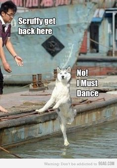 SkunkWire brings you cute and funny animal pictures every day. We got funny cats and cute dogs, plus lots of other funny animal pictures Funny Animal Jokes, Funny Dog Memes, Cute Funny Animals, Animal Memes, Funny Cute, Funny Dogs, Cute Dogs, Animal Humor, Memes Humor