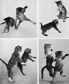 black and white jumping kittens