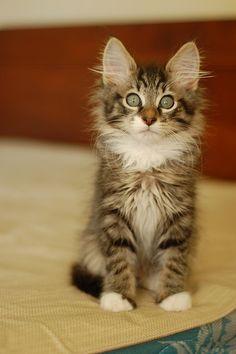 I love kitties.