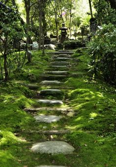 Enchanted forest stepping stones.