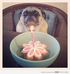 This would totally be Odin if we gave him a cake with a lit candle.. lol.