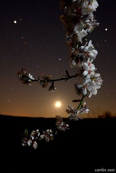 tulipnight: atardecer lunar by carlos oses Beautiful Nature Wallpaper, Beautiful Moon, Beautiful Flowers, Moonlight Photography, Moon Photography, Moon Pictures, Nature Pictures, Mystic Moon, Moon Dance