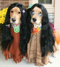 Hippie Dippin Dogs