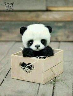 Panda so cute!