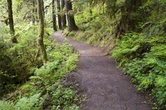 Get Back to #Nature With Some #Portland Friends!  #PortlandRealEstate #Hiking #Trails #Explore #TheGreatOutdoors