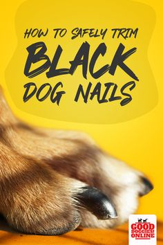 Clipping dog nails can be easy but clipping black dog nails can be a bit more challenging. Take a look at our guide on how to safely trim your dog's overgrown nails without hurting your pup.  ##dog #trim #grooming #ToenailFungusVinegar Clipping Dog Nails, Trimming Dog Nails, Dog Grooming Tips, Dog Grooming Business, Basic Dog Training, Puppy Training Tips, Dogs Peeing In House, Black Lab Puppies, Corgi Puppies