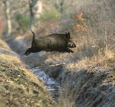 23 Very Funny Pictures To Make Your Day – Page 3 of 3 – The Viraler Wild Boar Hunting, Pig Hunting, Hog Dog, Funny Animals, Cute Animals, Very Funny Pictures, Random Pictures, Photo Animaliere, Animal 2