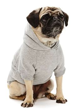 Sup Dog Hoodie | Nasty Gal | Who knew Nasty Ga carried dog clothes | $28