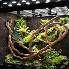 Flexible Bendable Jungle Vines For Terrarium Terrarium Diy, Turtle Terrarium, Terrarium Supplies, How To Make Terrariums, Snake Terrarium, Vines, Chameleon Lizard, Reptile Habitat, Reptile Accessories
