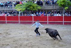 Santacara: Vacas Merino de Marcilla Fiestas de Santa Eufemia ... Goats, Animals, Cows, September, Fiestas, Animales, Animaux, Animal, Animais