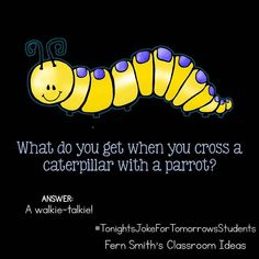 Tonight's Joke for Tomorrow's Students What do you get when you cross a caterpillar with a parrot? A walkie-talkie! Follow me on Pinterest where I have an entire board dedicated to my jokes. Pinterest: FernSmith Board: Jokes for Kids. #TonightsJokeForTomorrowsStudents #FernSmithsClassroomIdeas