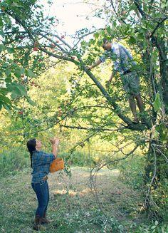 apple picking team work