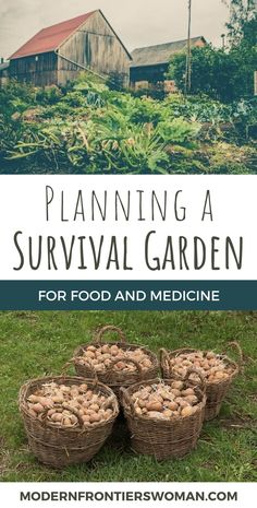 Planning a Survival Garden for Food and Medicine Whether you are planting a survival garden out of necessity, preparedness, or simply to become more self reliant, you will appreciate the feeling of security it provides! Learn which plants to sele… Organic Gardening, Gardening Tips, Vegetable Gardening, Veggie Gardens, Gardening Gloves, Organic Farming, Permaculture Garden, Organic Compost, Gardening Apron