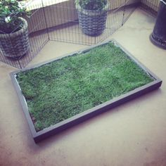 Large Dog Litter Box from Doggy and the City in Los Angeles. The large dog litter box is perfect for big dogs in apartments. #dogpottypatch #doglitterbox #doggrasspad #dogpottygrass #indoordogpotty #grassdogpotty #puppypottytraining www.doggyandthecity.com Indoor Dog Potty, Porch Potty, Big Dogs, Large Dogs, Dogs And Puppies, Dog Litter Box, Le Chihuahua, Puppy Potty Training Tips, Real Dog