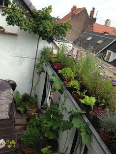 My 10 sq meter rooftop garden. Rooftop Garden, Balcony Garden, Small Space Gardening, Urban Gardening, Natural Garden, Green Life, Outdoor Gardens, Roof Gardens, Dream Garden