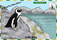 Ahead of World Penguin Day, The Latin America Travel Company have created a guide on where to see penguins in their natural habitats. Penguin Day, African Penguin, Sustainable Tourism, Travel Companies, Latin America, Habitats, Penguins, South Africa, Natural