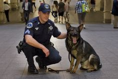 The diligent dogs who protect New York. Photo: Dooley and his partner, MTA Police Sgt. William Schade, on the job. Photo: Anne Wermiel/NY Post