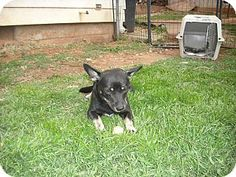 Protective Dog Training Melbourne