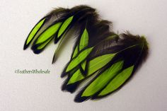 Hey, I found this really awesome Etsy listing at https://www.etsy.com/listing/87786411/bright-green-feathers-lime-green