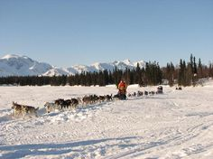 See the Iditarod Trail Sled Dog Race: There is no stopping these dogs! #bucketlist #travel