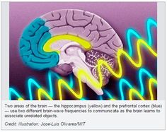 How Brain Waves Guide Memory Formation - pinned by @PediaStaff – Please Visit ht.ly/63sNtfor all our pediatric therapy pins