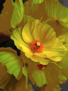 Yellow poppy bouquet