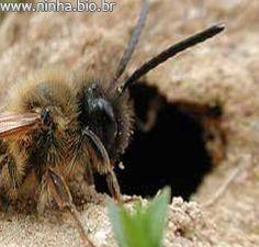 abelha entrando em sua toca