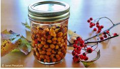 Forage for hawthorn berries and make an extract, from http://ouroneacrefarm.com/hawthorn-berries-identify-harvest-make-extract/