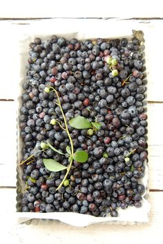 Blueberries fresh picked - so many possibilities - all yummy.