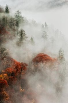 ✯ Touch Of A Foggy Morning