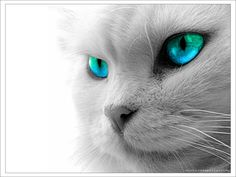 I love the eyes. I know they're photoshopped, but it's pretty!