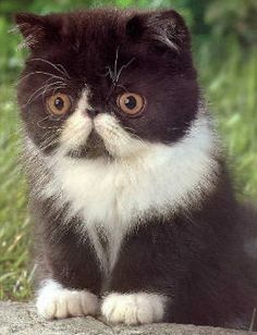 Ha I love these funny persian cats