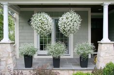 Hanging Baskets : 5 Secrets the Pros Use | The Garden Glove
