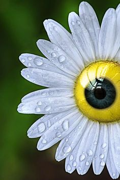 freaky flower