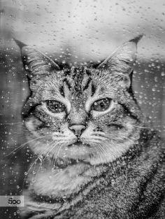 Photograph Rainy Days by Ricardo Mateus on 500px