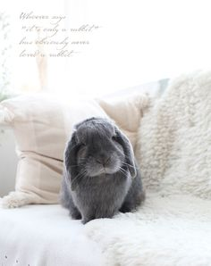 Whoever says 'it's only a rabbit' obviously never loved a rabbit!