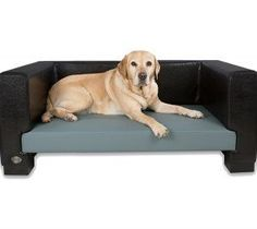 Chester & Wells Windsor dog bed is a contemporary faux leather dog bed which is stylish and fits beautifully in any home. Plush Dog Bed, Dog Sofa Bed, Sofa Beds, Cavachon Puppies, Puppy Supplies, Cool Dog Beds, Brown Dog, Pet Beds, Doggie Beds
