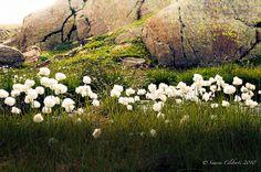 white dreaming flowers