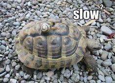 slow-down-turtle-funny-animals-186.jpg (600×435)