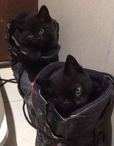 https://www.gumtree.com.au/s-ad/chandler/cats-kittens/rag-doll-x-kittens/1147088466This Board Sponsored by:www.LaborofFaith.com