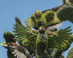 Mosaïcultures Internationales de Montréal: 2013 Monumental Plant Sculptures