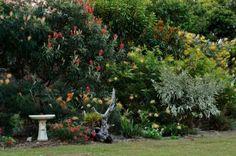 Grevillea garden Australian Garden Design, Australian Native Garden, Back Gardens, Small Gardens, Full Sun Plants, Corner Garden, Outdoor Spaces, Outdoor Decor, Small Birds