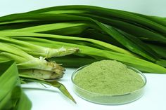 Pandan Leaves is extremely useful for healing various wounds and diseases such as smallpox, and is said to be a great pain reliever in such headache, chest pain, arthritis, earache and a fever reducer as well.  These are only a few of the health benefits that this plant and KINGS Herbal Supplement can give you.  Important Reminder: Kings Herbal has no approved therapeutic claims and should not be used as treatment for any kind of illness.
