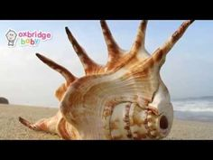 I Love Shells by Oxbridge Baby (photo montage) - YouTube