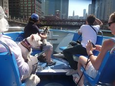 Cruises to take with your dog