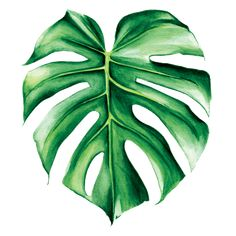 doesn't like green when it comes in heart-shaped leaves? Watercolor Leaves, Watercolour Painting, Painting & Drawing, Watercolors, Tropical Art, Painted Leaves, Plant Art, Leaf Art, Fabric Painting